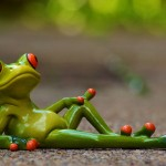 frog lying down